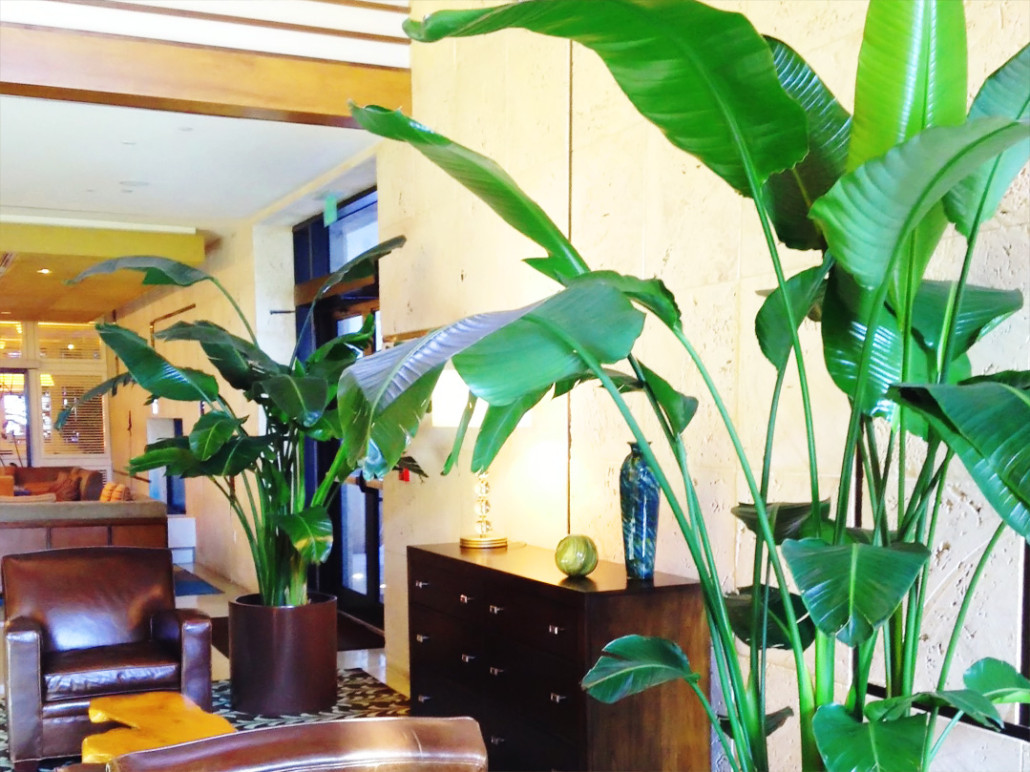 Interior landscape gallery plant care interiorscapes for Indoor plant maintenance