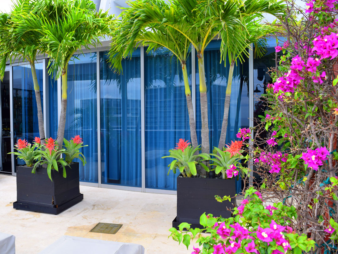 Office Plant Care Leasing And Maintenance South Florida