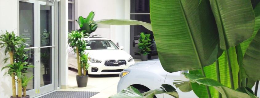 indoor-commercial-landscaping-car-dealer