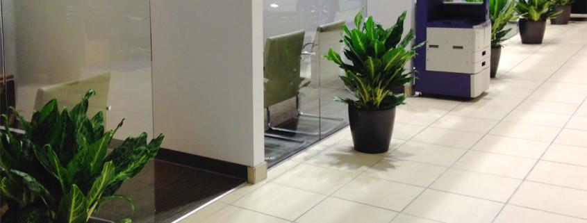 indoor-plants-car-showroom