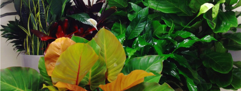 indoor-plants-warehouse