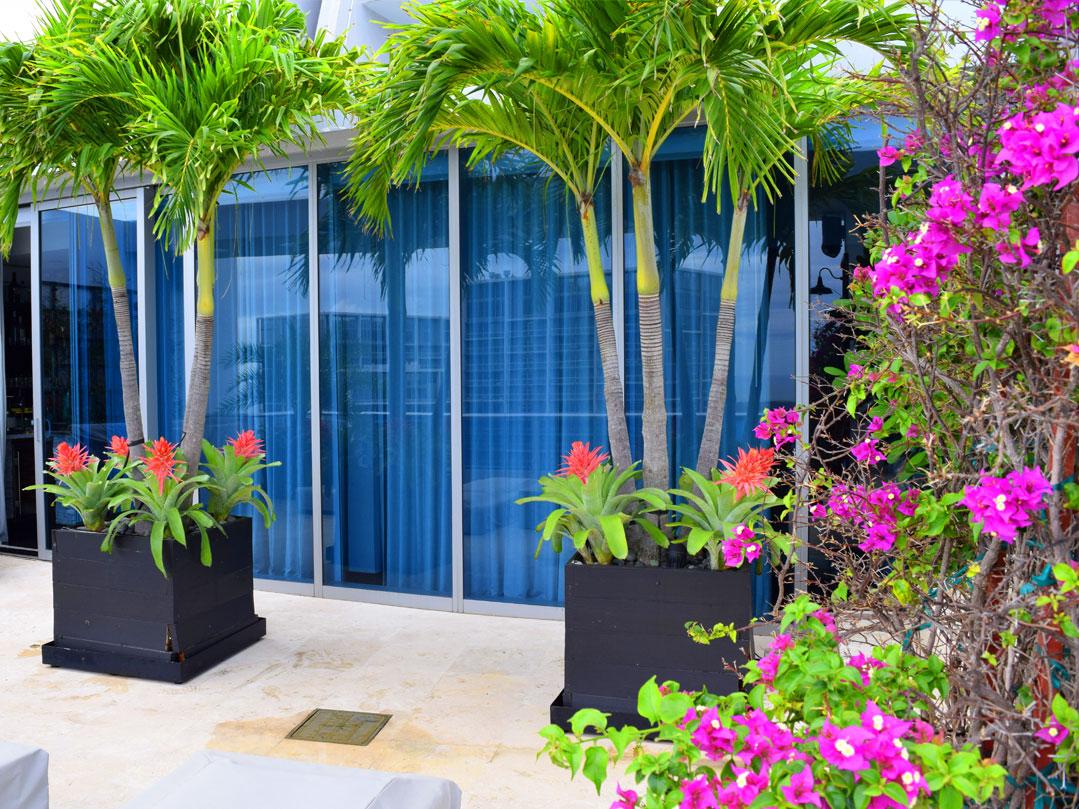 Indoor Amp Outdoor Vertical Garden Plants Amp Walls Plant Care