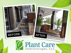 plant-care-services-before-before-after