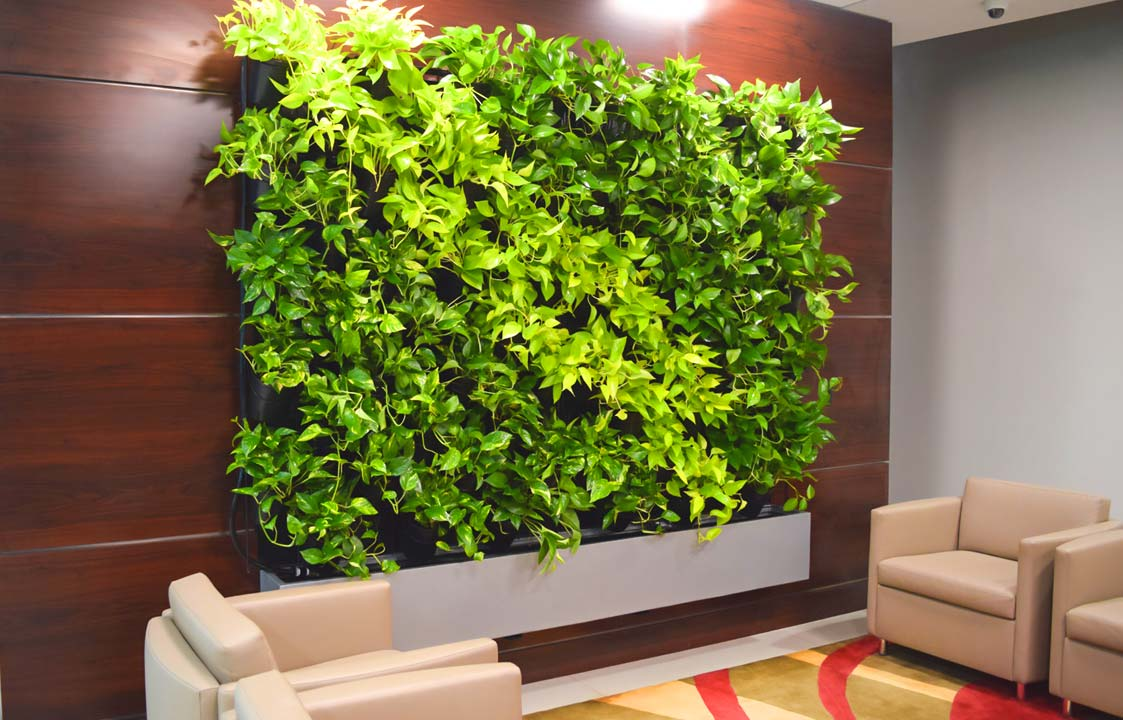 Green-Wall-Live-Divider-Plant-Care